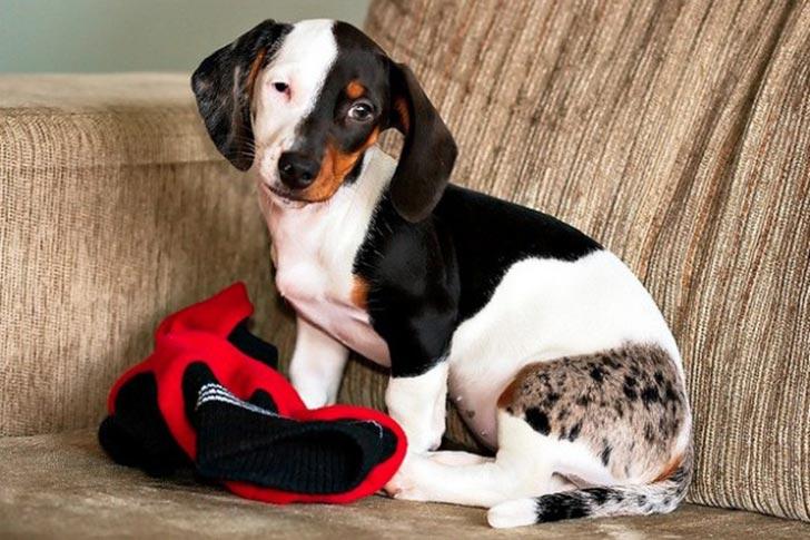 dog-coat-markings-28