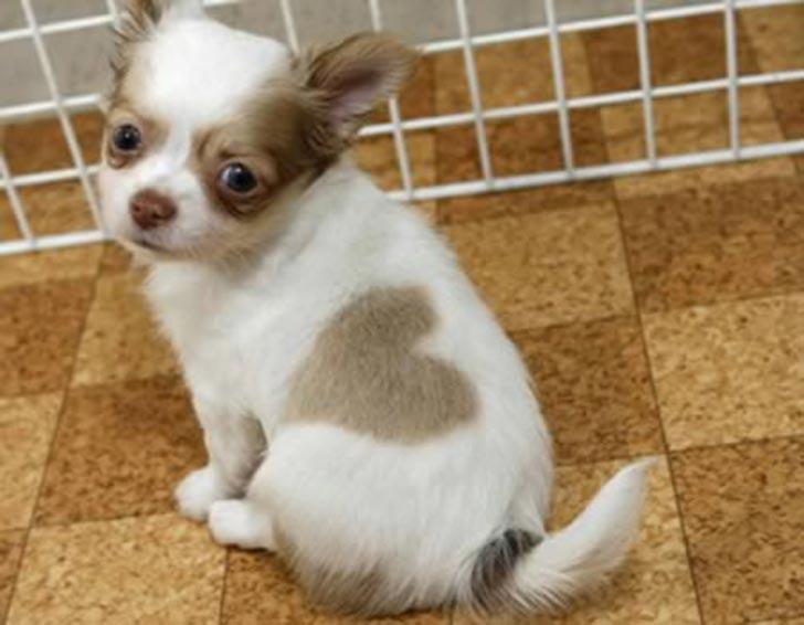 dog-coat-markings-35