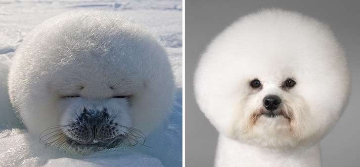 funny-seals-look-like-dogs-40-574d9b041f2dc__880 2