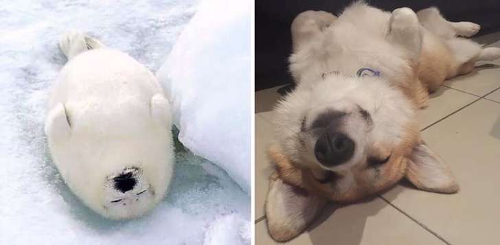 seals-look-like-dogs-13 2