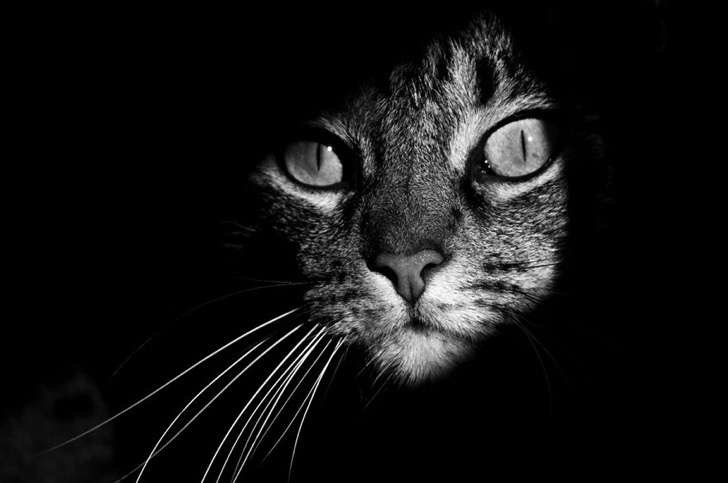 mysterious-cat-photography-black-and-white-1-57bffb43091ee__880 2