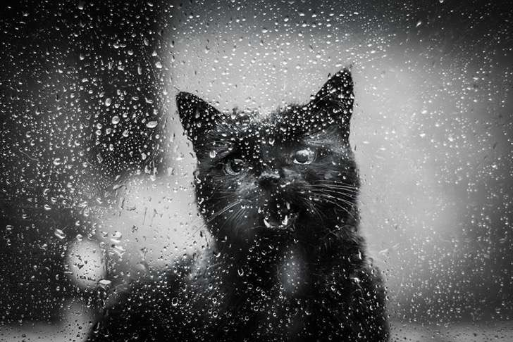 mysterious-cat-photography-black-and-white-12-57bffaf53d402__880 2