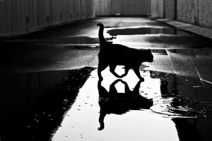 mysterious-cat-photography-black-and-white-20-57bffb077ad7b__880 2