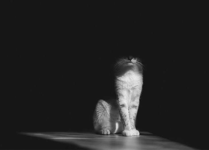 mysterious-cat-photography-black-and-white-28-57bffb1762bfc__880 2