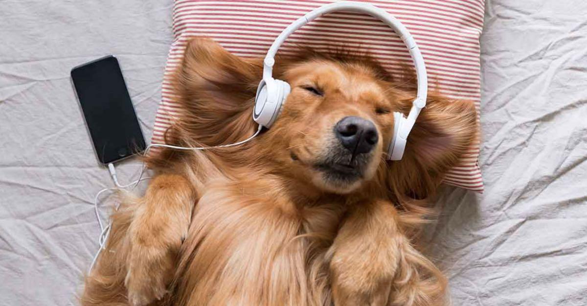 Resultado de imagen para musica mascotas