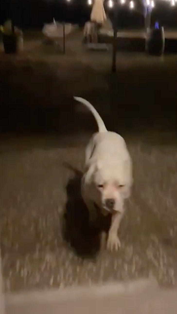 Prende y apaga luces para llamar a su perro sordo y que regrese a casa. El  único modo de comunicarse | Upsocl