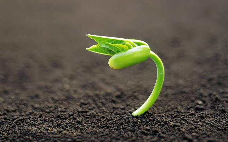 comenzar-semilla