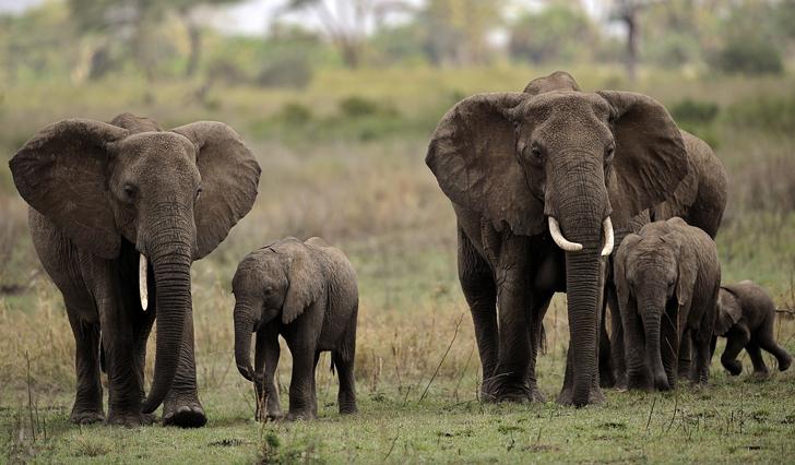 Resultado de imagen para Los elefantes